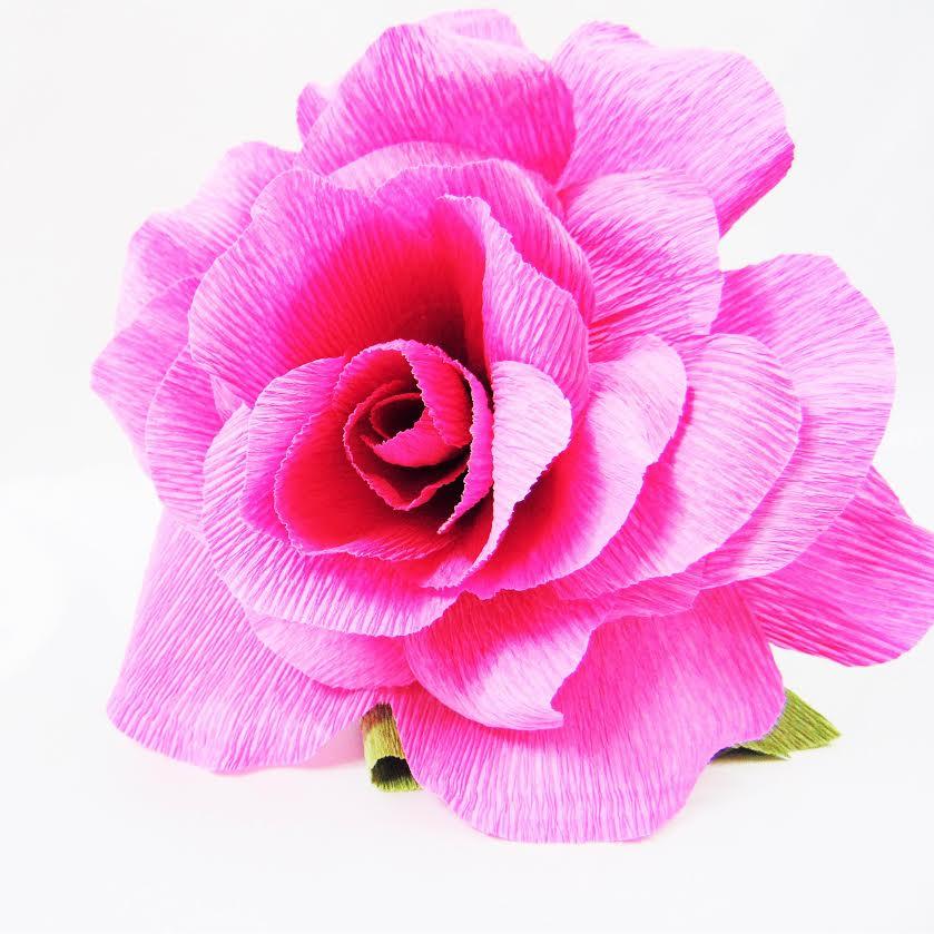 crepe-rose.jpg